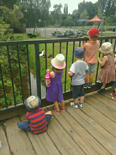 watching ducklings-6375